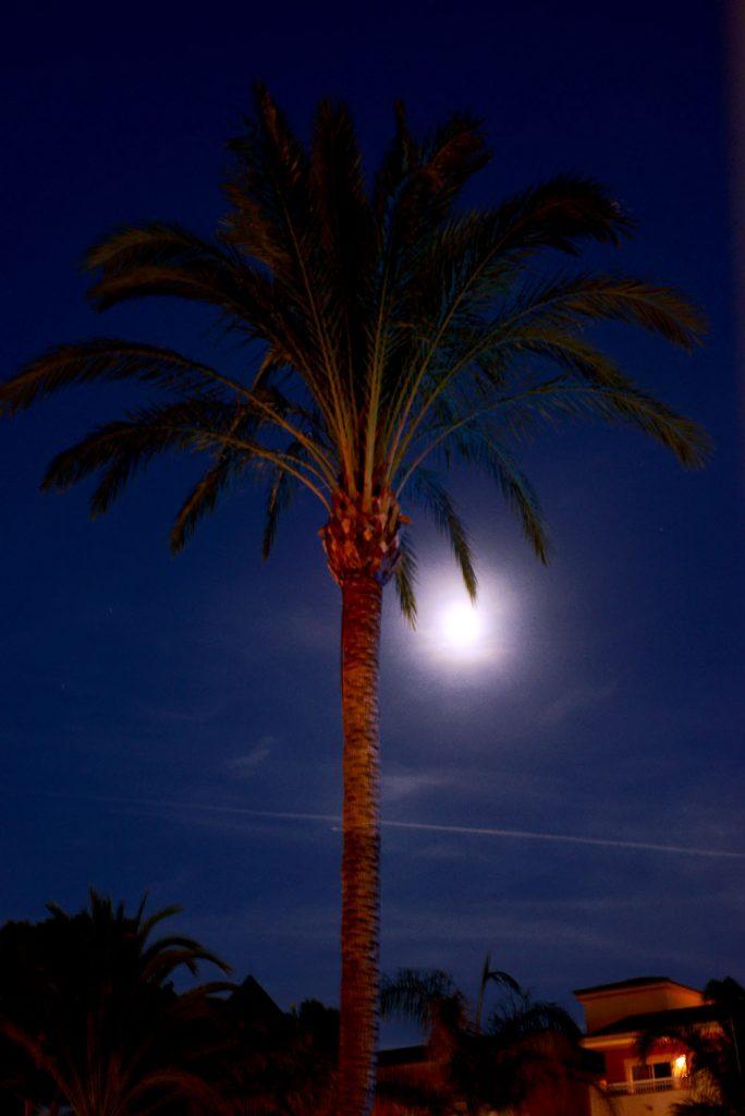 Пальма-под-луной